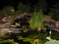 Well lit wildlife pond